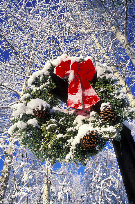 Winter Christmas wreath hangs outside on a post with dusting of snow and frosty birch trees, Fairbanks, Alaska