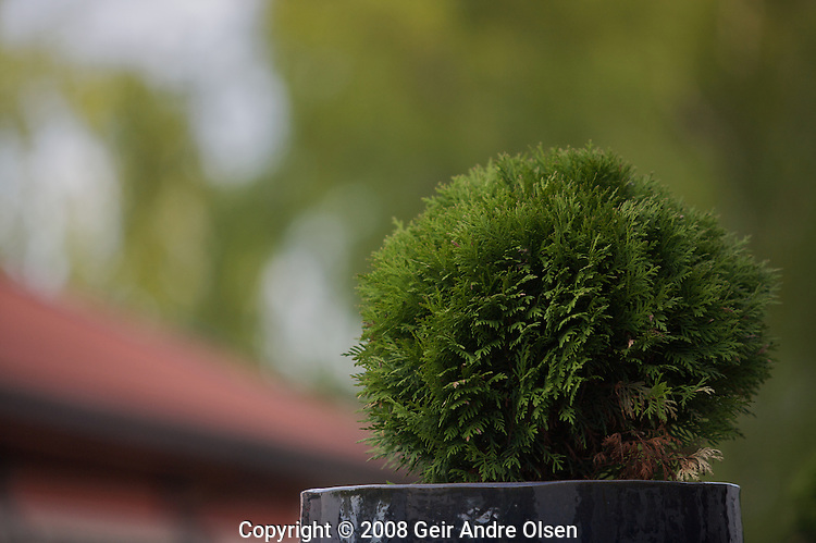 a miniature tree against a diffused background outside Oslo, Norway