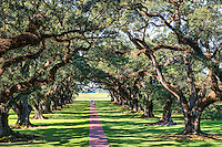 Oak Alley Plantation along the banks of the Mississippi river. Wonderful 300 year old live oak trees.