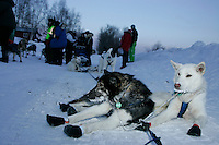 Wednesday March 7, 2007   ----  Louis Nelson Sr.' dogs take a rest after arriving at Takotna while Louis has his sled bag checked for mandatory gear by the volunteer checkers.