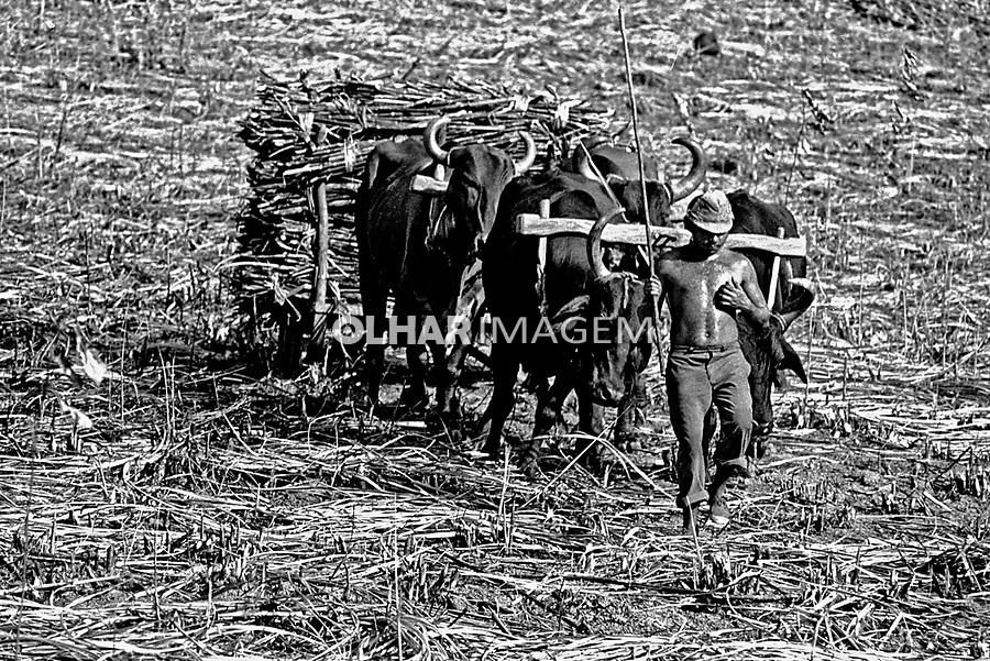 Trabalho de boias-frias em canavial na Zona da Mata, Pernambuco. 1979. Foto de Juca Martins.