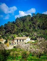 Spanien, Balearen, Mallorca, bei Es Capdella: Mandelbluete und Finca | Spain, Mallorca, near Es Capdella: Finca surrounded by almond blossom