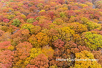63876-02415 Aerial view of fall color trees Stephen A. Forbes State Park Marion Co. IL