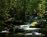 Light plays on a section of stream in the Great Smoky Mountains National Park. Smoky Mountain photos by Gordon and Jan Brugman.