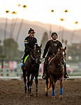 OCT 26: Breeders' Cup Juvenile  entrant Eight Rings, trained by Bob Baffert, gallops at Santa Anita Park in Arcadia, California on Oct 26, 2019. Evers/Eclipse Sportswire/Breeders' Cup