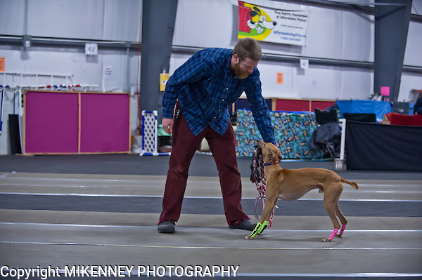 2013 Santa Paws Flyball Tournament held on Dec 6 - 8 at Boomtowne Canine Campus in Farmington, Ny