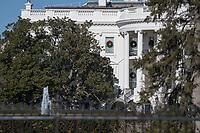Historic White House Jackson Magnolia Tree Images Admedia Photo