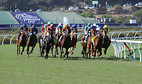 DEL MAR, CA - NOVEMBER 04: The pack rounds the turn during the Breeders' Cup Filly and Mare Turf race on Day 2 of the 2017 Breeders' Cup World Championships at Del Mar Racing Club on November 4, 2017 in Del Mar, California. (Photo by Sue Kawczynski/Eclipse Sportswire/Breeders Cup)