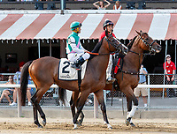 Projected in the post parade as Qurbaan (no. 6) wins the Bernard Baruch Handicap (Grade 2), Sep. 3, 2018 at the Saratoga Race Course, Saratoga Springs, NY.  Ridden by Irad Ortiz, Jr., and trained by Kiaran McLaughlin, Qurbaan finished  a nose in front of Forge (no. 3) and Projected (no. 2) in a three horse photo finish.  (Bruce Dudek/Eclipse Sportswire)