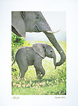 Poster by Bruce McGaw Graphics<br /> Elephant Walk<br /> Paper: 16 x 20 in.<br /> Perfect for mounting or framing. Watermark does not appear on product.