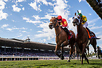 November 2, 2019: Iridessa, ridden by Wayne Lordan, wins the Maker's Mark Breeders' Cup Filly & Mare Turf on Breeders' Cup World Championship Saturday at Santa Anita Park on November 2, 2019: in Arcadia, California. Alex Evers/Eclipse Sportswire/CSM