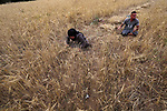 Suhaib  Qudih, 33, and his sister Naziha Qudih, 38, who were lost their legs after they were shot by Israeli forces during the weekly border protests, harvest wheat crop at their field, in Khan Younis in the southern Gaza Strip, May 01, 2019. Unemployment rate in Palestine increased in 2018 to reach about 31% of the labour force participants compared with about 28% in 2017, where the number of unemployed individuals increased from 377 thousand in 2017 to 426 thousand in 2018. Photo by Ashraf Amra