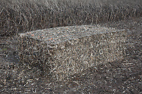 Bale of bean straw<br /> ©Tim Scrivener Photographer 07850 303986<br />      ....Covering Agriculture In The UK....