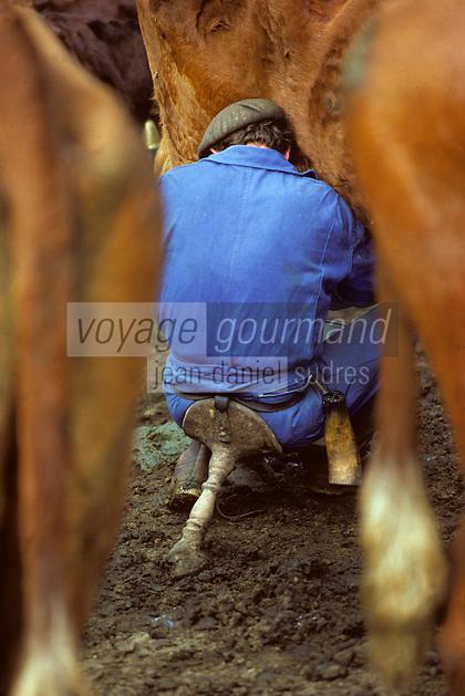 Europe/France/Auvergne/15/Cantal/env de Mandailles: Traite des vaches de race Salers au buron pour la préparation en estive du fromage AOC Cantal PHOTO D'ARCHIVES // ARCHIVAL IMAGES<br /> FRANCE 1980