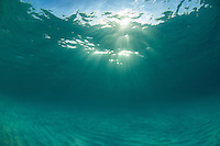 Underwater at Honeymoon Beach<br /> Virgin Islands National Park<br /> St. John<br /> U.S. Virgin Islands