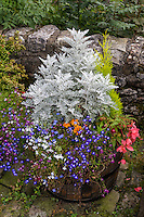 UK, England, Kettlewell, Yorkshire.  Flower Pot with Dusty Miller and Flowers.