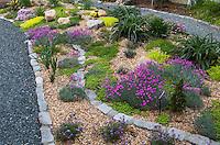 Scree rock garden with pink flowering Dianthus Norfolk Botanical Garden