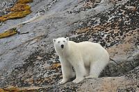 Svalbard Archipelago [Norway].
