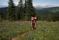 Hiker hiking with Backpack along Three Brothers Trail in Cascade Mountains, Manning Provincial Park, BC, British Columbia, Canada (Model Released)