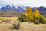 Mountain range in autumn, Torres del Paine, Torres del Paine National Park, Patagonia, Chile