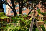 DePaul Urban Garden August, 2013