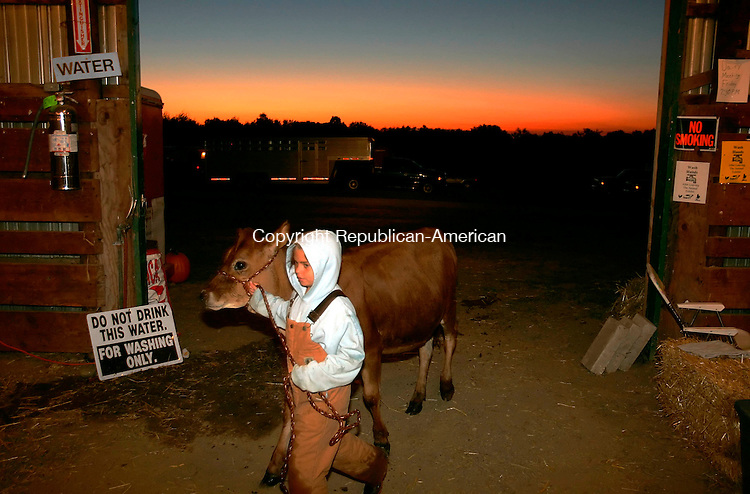 BETHLEHEM, CT -  - 10 SEPTEMBER 2005 -091005JS07--DAILY PHOTO FOR COLOR CONSIDERATION<br /> Rachel Bozzi, 10, of Torrington moves her winter Jersey calf Meg into the cattle barn after washing it first thing in the morning on Saturday. Members of the Bozzi family leases space at Sunset Hill Farm in Canaan to house their animals.<br /> Jim Shannon / Republican-American<br /> Sunset Hill Farm; Canaan, Rachel Bozzi, Torrington are CQ
