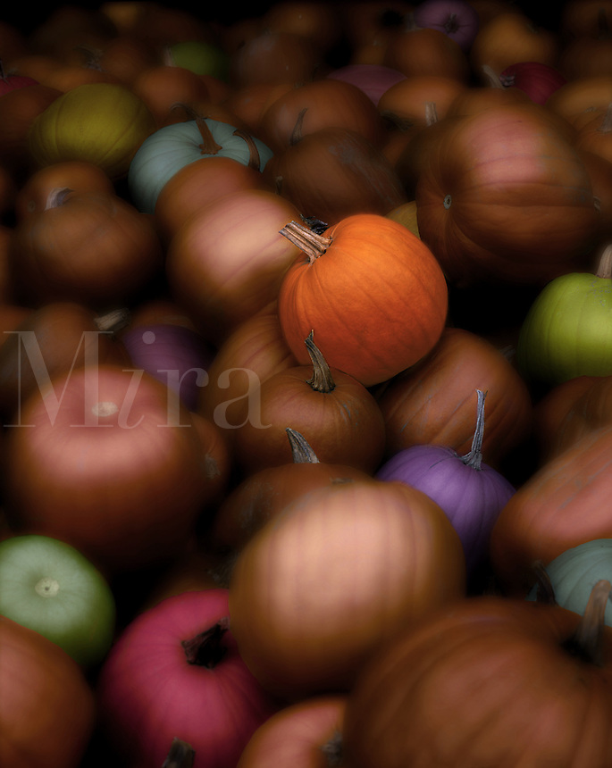 Digital illustration of a multicolored pile of pumpkins. Concept - genetic engineering.