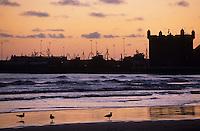 Afrique/Afrique du Nord/Maghreb/Maroc/Essaouira : La plage, le port de pêche et les fortifications dans la lumière du soir