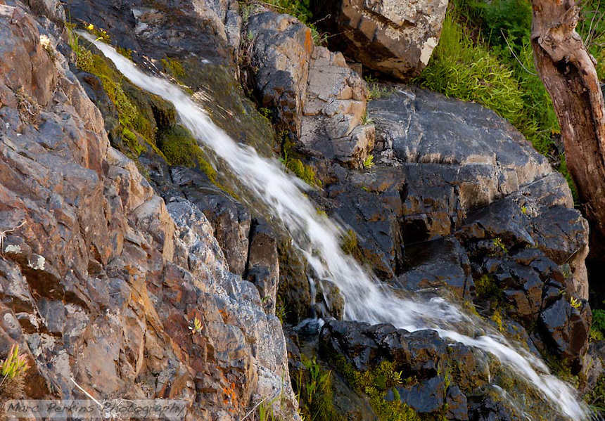 Water flows over moss covered rocks.  From Greg and my hike in Upper Hot Spring Canyon in the Cleveland National Forest.