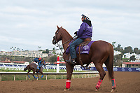 DEL MAR, CA - NOVEMBER 02: A horse watches while Breeder's Cup horses make their way around the track at Del Mar Thoroughbred Club on November 2, 2017 in Del Mar, California. (Photo by Jamey Price/Eclipse Sportswire/Breeders Cup)