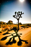 """Where The Streets Have No Name"" - Joshua Tree NP, CA - a moon lite night<br />