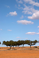 dry fields with oak trees herdade da malhadinha nova alentejo portugal