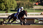 OCT 29: Breeders' Cup Dirt Mile entrant Omaha Beach, trained by Richard E. Mandella,  at Santa Anita Park in Arcadia, California on Oct 29, 2019. Evers/Eclipse Sportswire/Breeders' Cup