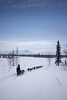 Robert Bundtzens sled dog team on trail near Finger Lake Chkpt 2006 Iditarod Finger Lake Alaska Winter