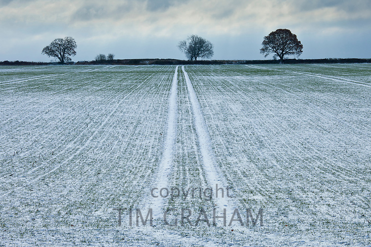 Frosty scene field and trees during hoar frost in winter, The Cotswolds, UK