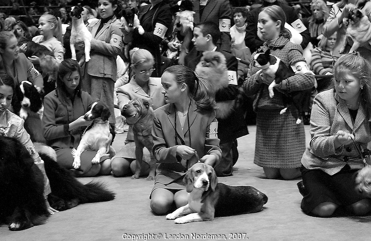 "NEW YORK - FEB 9:  Junior handlers prepare their pooches for the group picture before they are judged during the 128th Annual Westminster Kennel Club Dog Show at Madison Square Garden in New York City on Tuesday February 10, 2004. Every year there is a junior handling competition where, instead of the judging the dogs,  young men and women are judged for their ""handling"" excellence. (Photo By Landon Nordeman)"