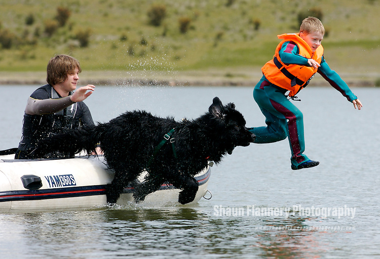 A Newfoundland Dog trains with a young swimmer during a training session at a Midlands reservoir.......