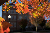 Fall leaves and Montgomery Hall<br />  (photo by Megan Bean / &copy; Mississippi State University)