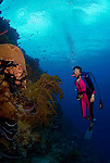 17 August 2005: Scuba diver Sally Herschorn glides up a coral encrusted undersea wall in sixty feet of water at Monte's Divi Reef off the coast of Klein Bonaire, in the Netherland Antilles. Housing used was an Aquatica D100 with 8 inch dome port. Lighting with twin Ikelite 225s strobes...Mandatory Photo Credit: Ed Wolfstein Photo