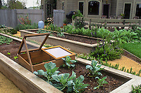 Cold frame placed within raised beds in backyard vegetable garden.