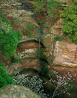 Starved Rock State Park, IL<br /> Thin waterfalls of Wildcat Canyon with flowering Serviceberry in early spring