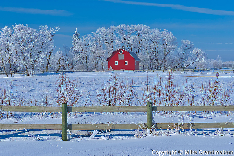 Red barn and fence surrounded by trees covered by heavy hoarfrost<br />