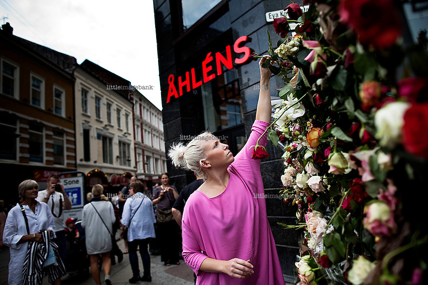 26.07.2011. After the rose parade 25.th of july, Oslo wakes up covered in roses. More than 200.000 roses decorated the city. Foto: Christopher Olssøn.