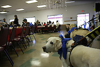 Guide dogs Patriot and Gaston were popular guests at the Lions Club  14th annual spaghetti dinner to benefit the Dana Foundation of Dana Middle School, Sunset Cliffs Surfing Association Spinal Chord Injuries and the Guide Dogs of the Desert, Saturday, February 2, 2008.