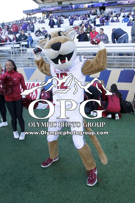 Nov 27:  Washington State mascot Butch against Washington.  Washington defeated Washington State 45-10 at Husky Stadium in Seattle, WA.