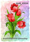 Kris, FLOWERS, BLUMEN, FLORES, paintings+++++,PLKKK3530,#f#, EVERYDAY