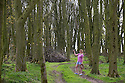06/05/16 <br /> <br /> Carolyn Bointon walks through green spring woodland at Alsop Moor near Ashbourne in the Derbyshire Peak District - seven days ago she was photographed walking through the same woods after heavy snowfall.<br /> <br /> All Rights Reserved: F Stop Press Ltd. +44(0)1335 418365   +44 (0)7765 242650 www.fstoppress.com