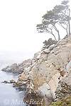 Point Lobos State Reserve, Monterey County, California, USA. Foggy scene in July.
