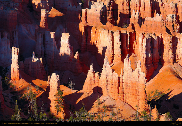 Queen Victoria and Queen's Garden Hoodoos at Sunset, Bryce Canyon National Park, Utah