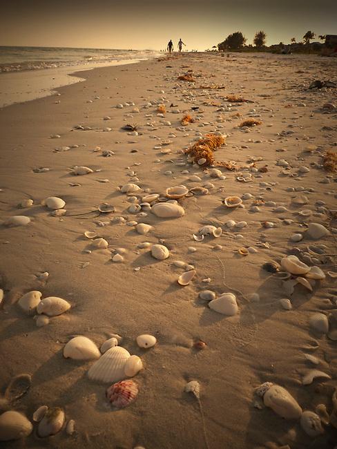 Shells on Sanibel Island, Florida
